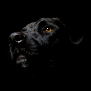 Episode 2 - The Black Dog Runs At Night