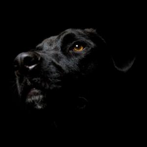 Episode 2 - The Black Dog Runs At Night